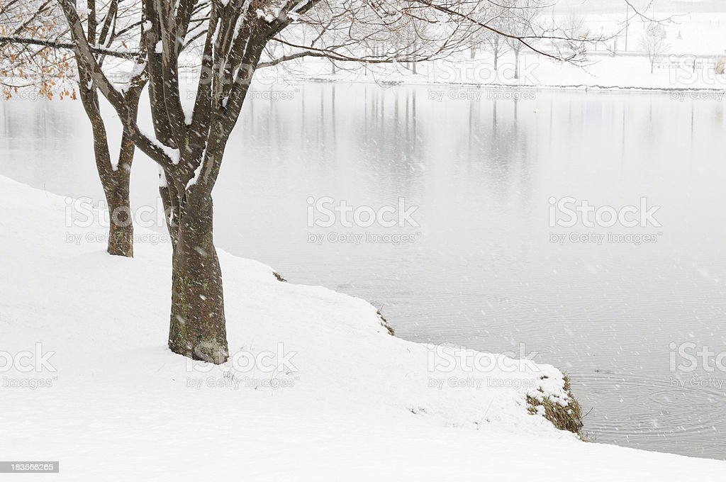 Trees and Pond in Snow Storm royalty-free stock photo
