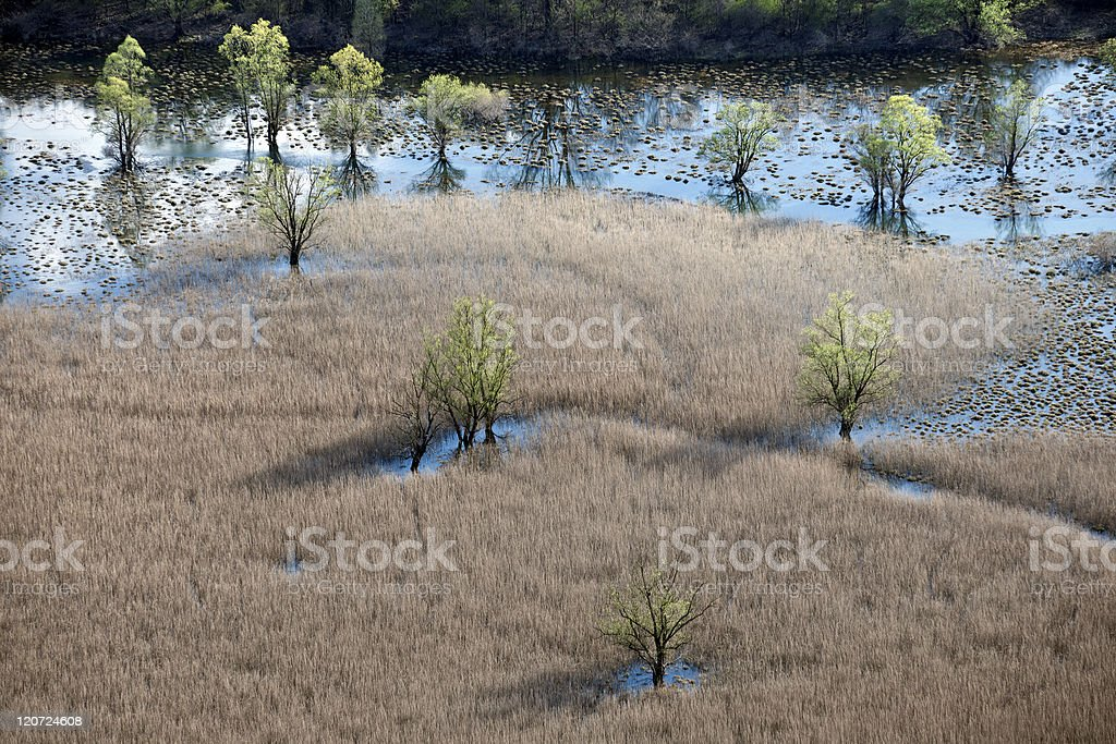 Trees and Reeds in Beautiful Lake royalty-free stock photo