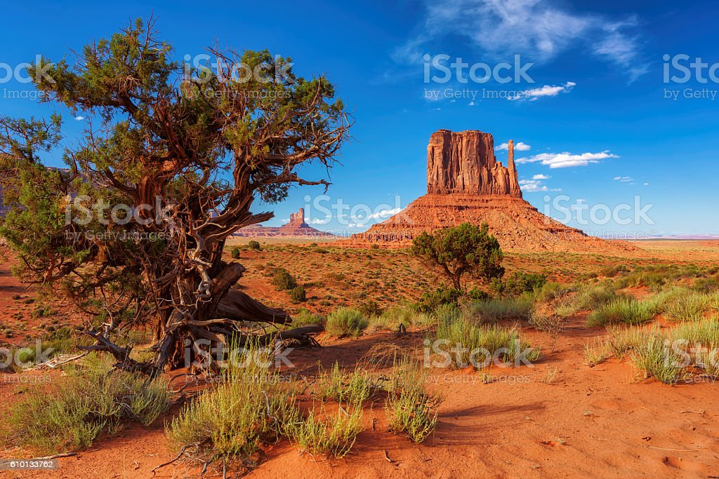 Trees and rocks in Monument Valley, Arizona stock photo