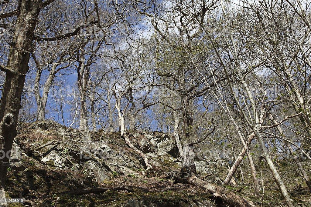 Trees and rocks stock photo