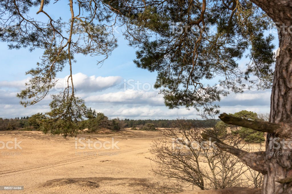 Trees and sand plains at the dutch dessert stock photo