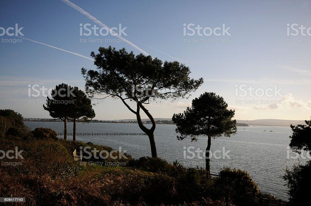 Trees and sea on Sandbanks, Poole, UK stock photo