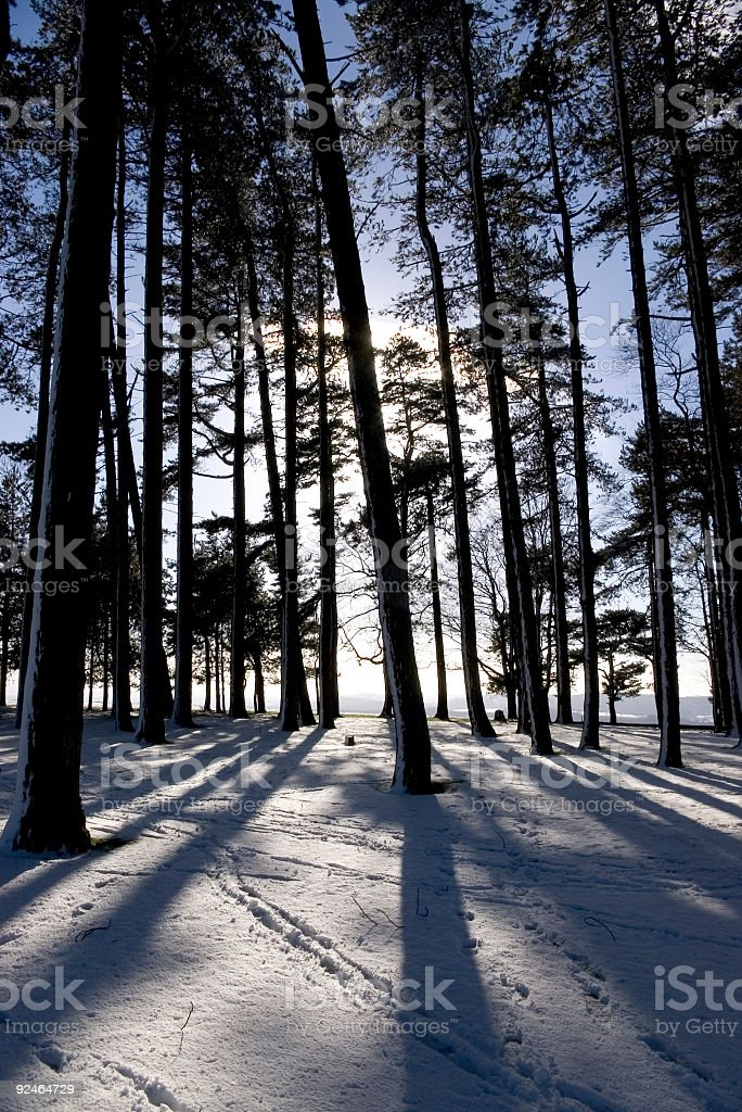 Trees and shadows in snow. royalty-free stock photo