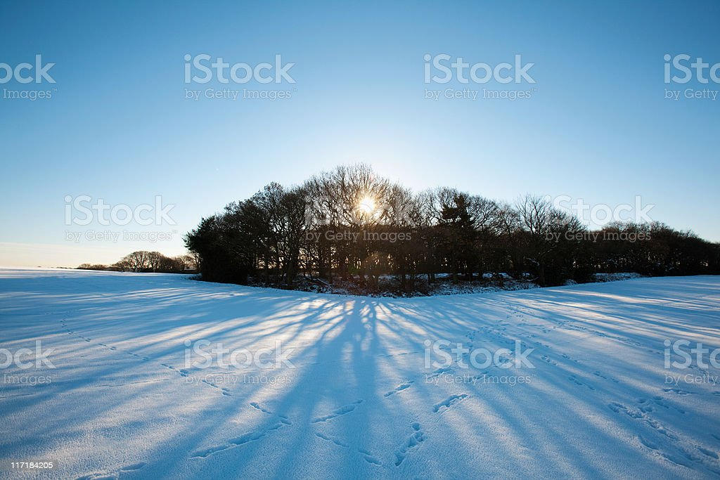 Trees and snow covered field, Warrington, UK stock photo