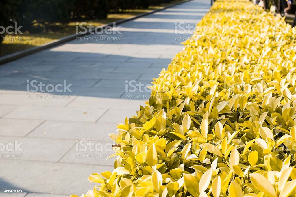 trees and street light in a park stock photo