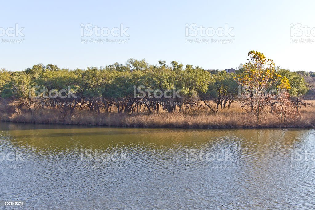 Trees at Brushy Creek Regional Trail stock photo