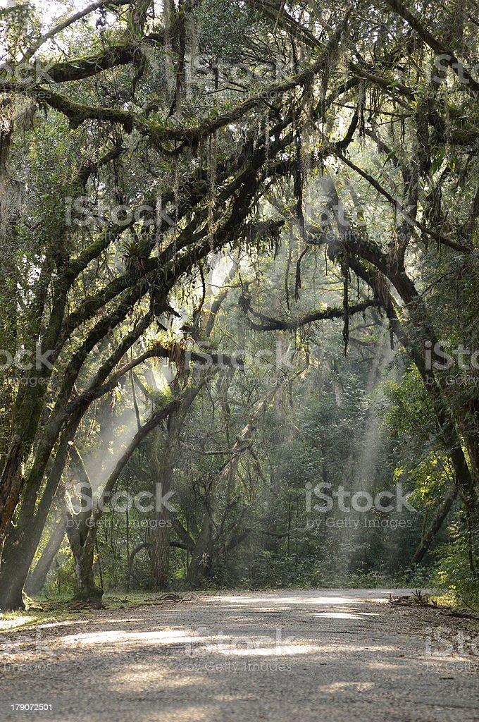 Trees at dawn royalty-free stock photo