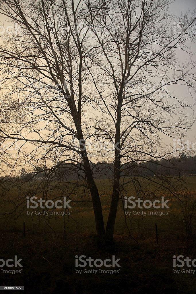 Trees at dusk stock photo