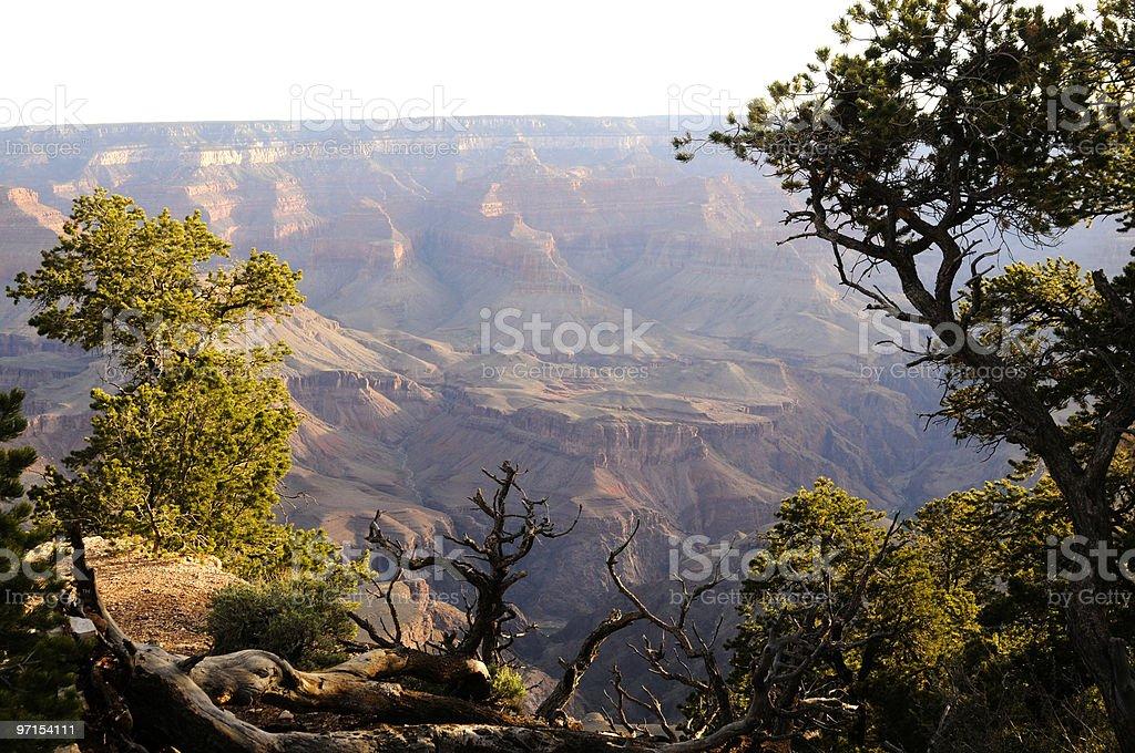 Trees at Grand Canyon stock photo
