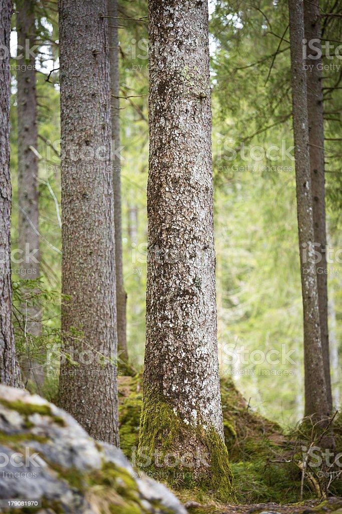 Trees at Lake Hintersee, Berchtesgaden, Germany royalty-free stock photo