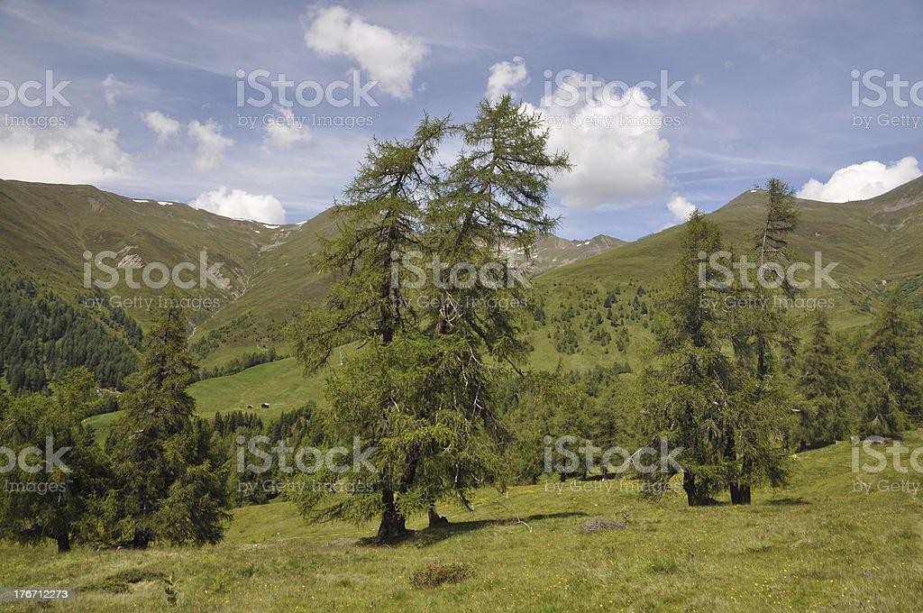 Trees at Nauders, Austria stock photo