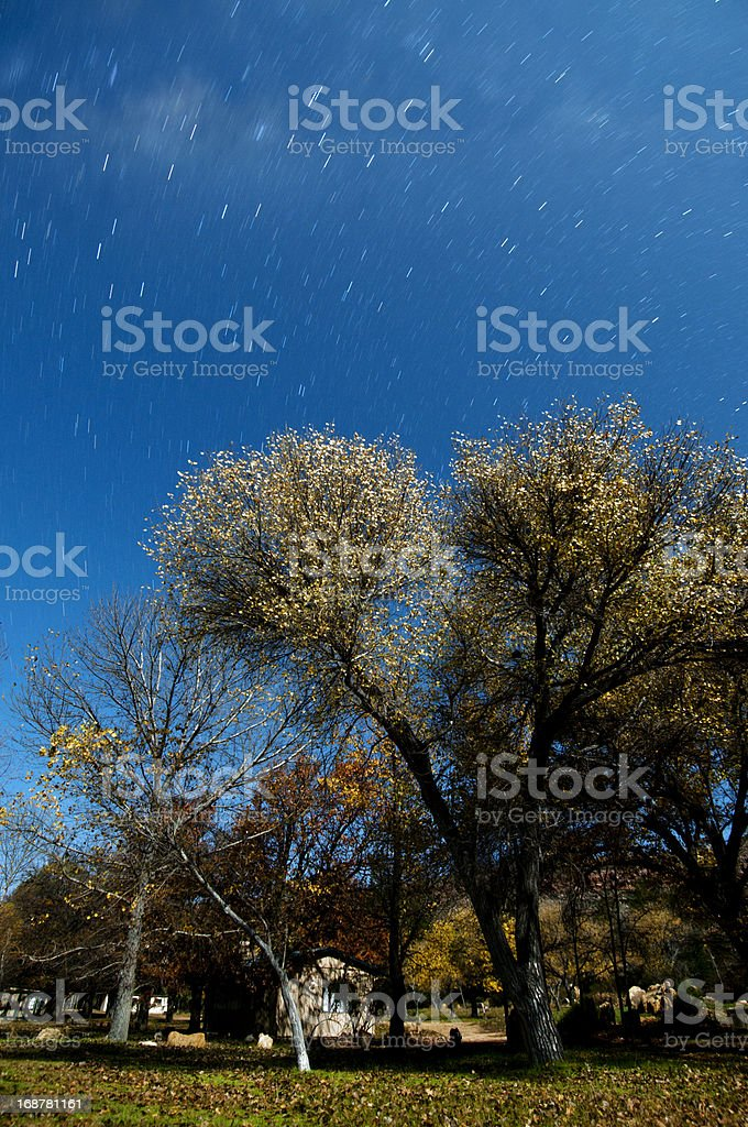 Trees at night with small house royalty-free stock photo