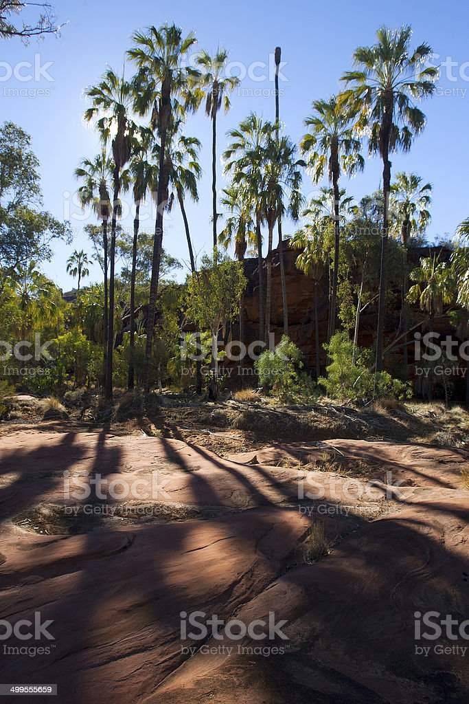 Trees at Palm Valley, Northern Territory, Australia royalty-free stock photo