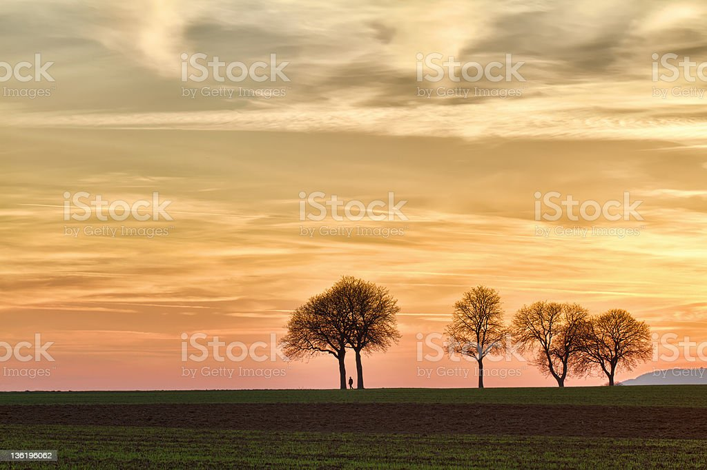 Trees at sunset with walker, Pfalz, Germany royalty-free stock photo