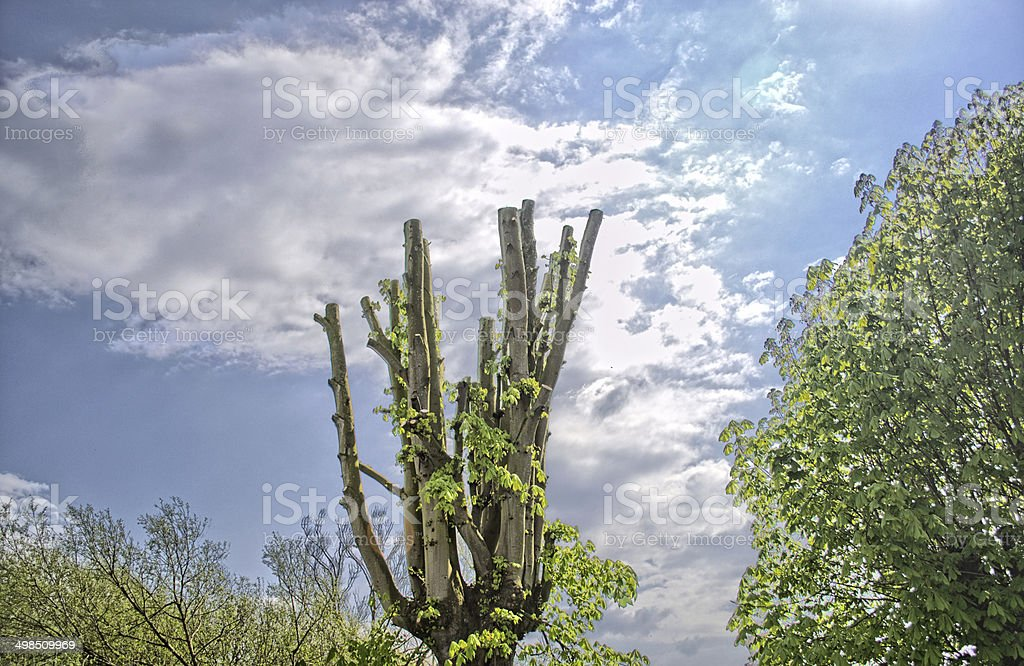 Trees at the beautiful sky background stock photo