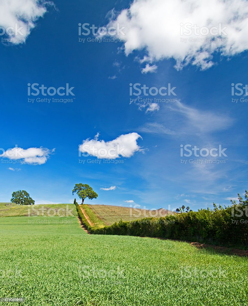 Trees at the top of the hill in Paso Robles stock photo
