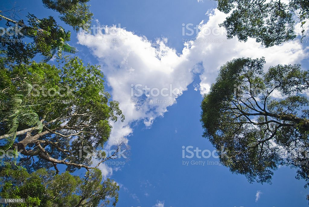 Trees background royalty-free stock photo
