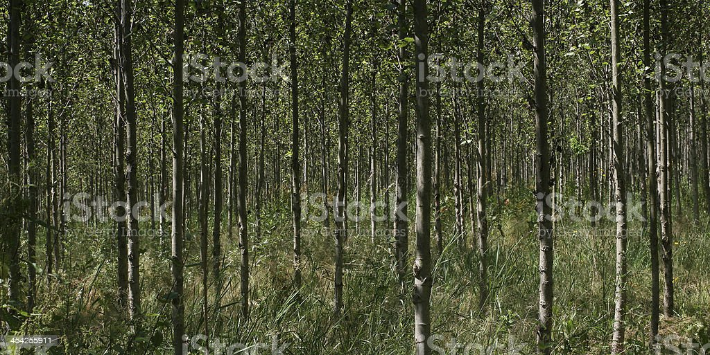trees backgrounds stock photo