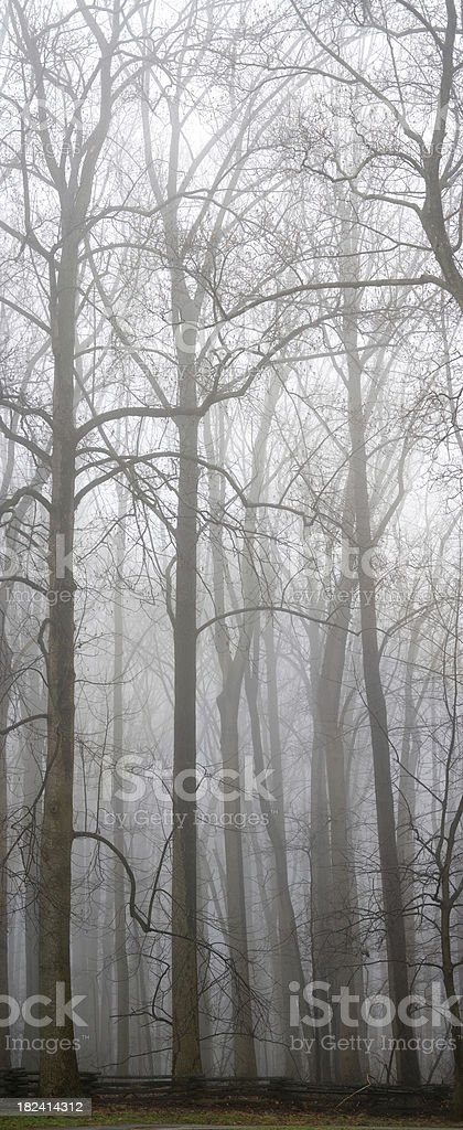 Trees behind the Fog - Portrait Orientation royalty-free stock photo