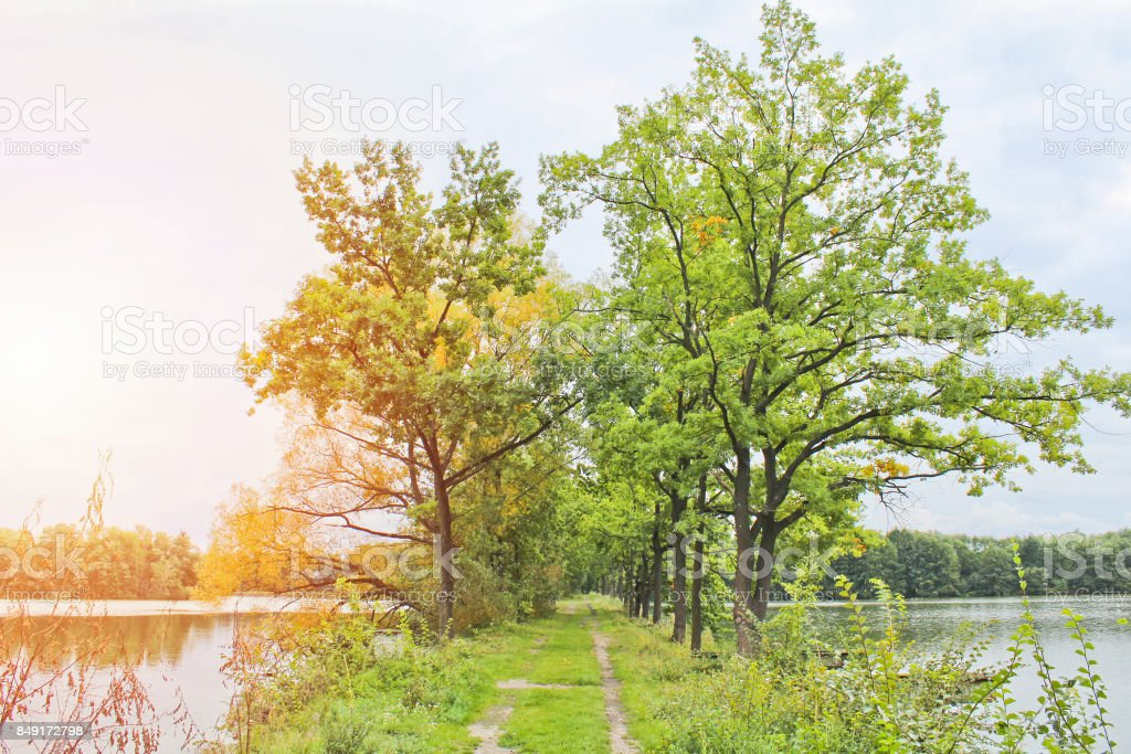 Trees between two pond with path, Czech landscape stock photo