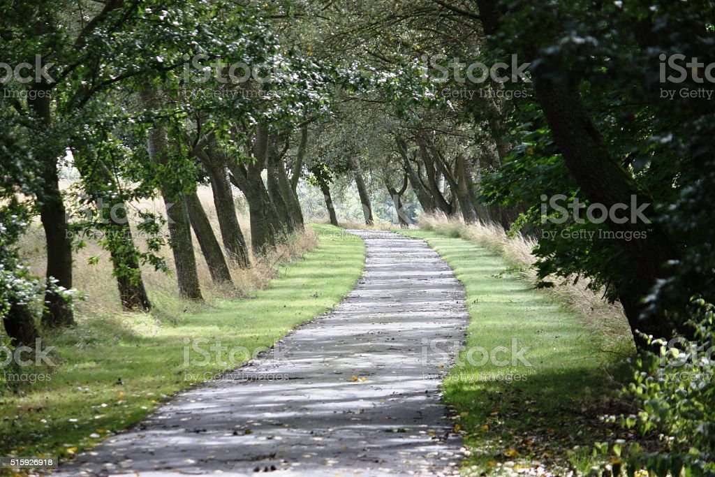 trees blown at an angle lining a road stock photo