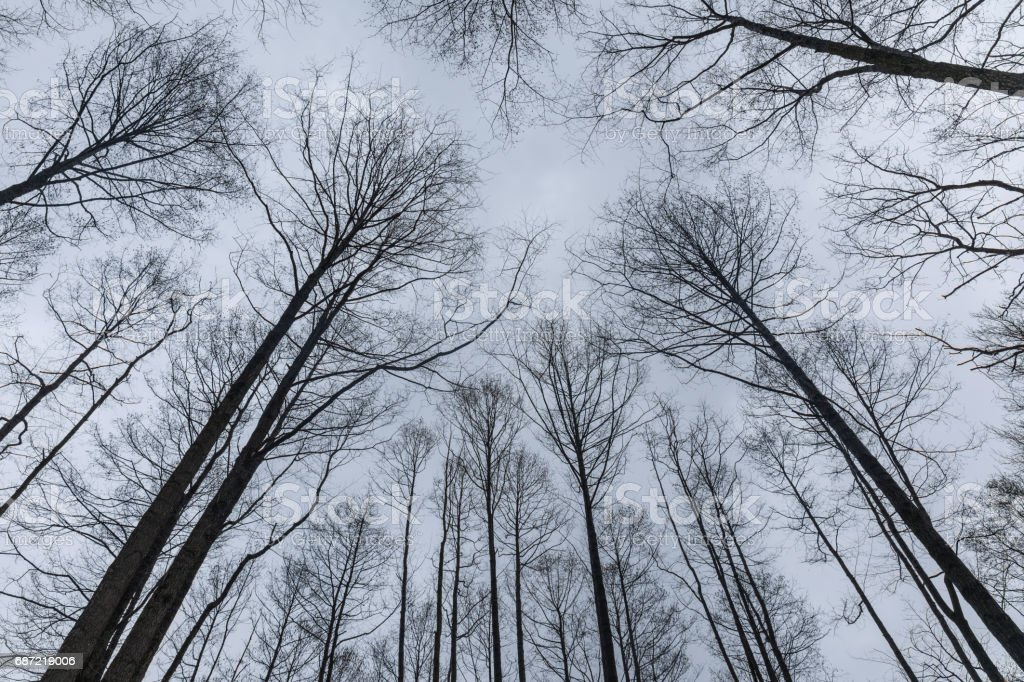 Trees branches against winter sky stock photo