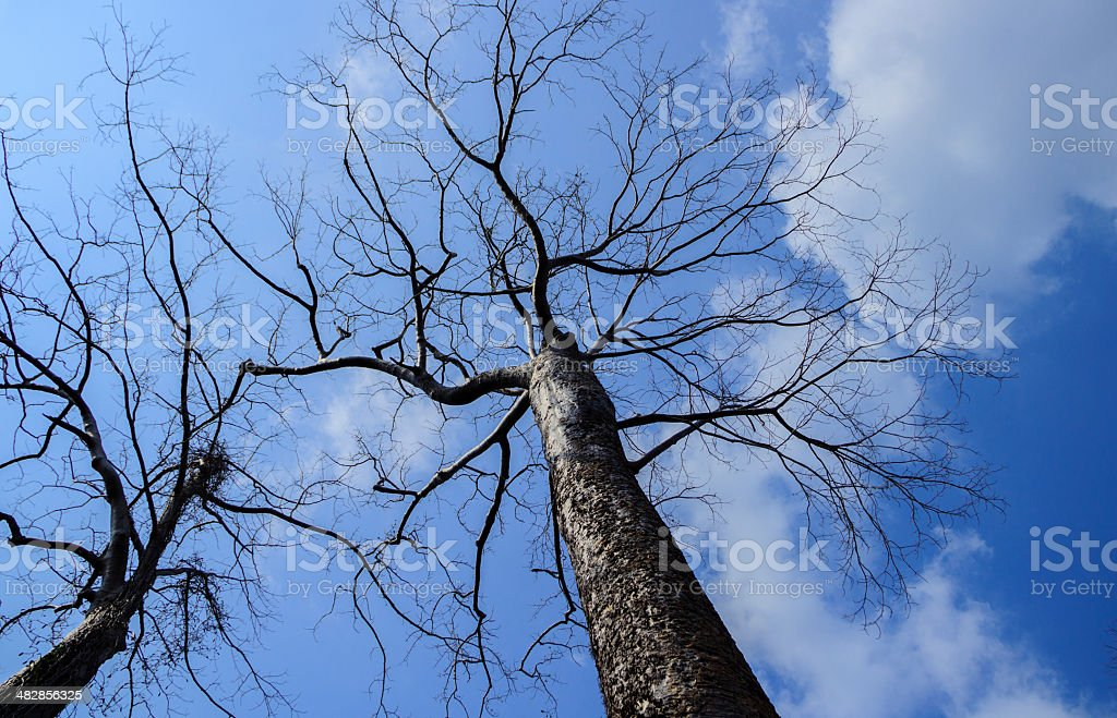tree's branches on blue sky stock photo