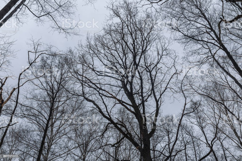 Trees branches on the background of cloudy sky stock photo