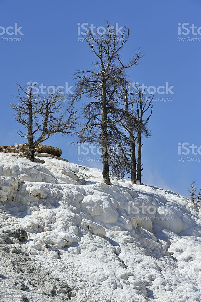 Trees burning from the roots royalty-free stock photo