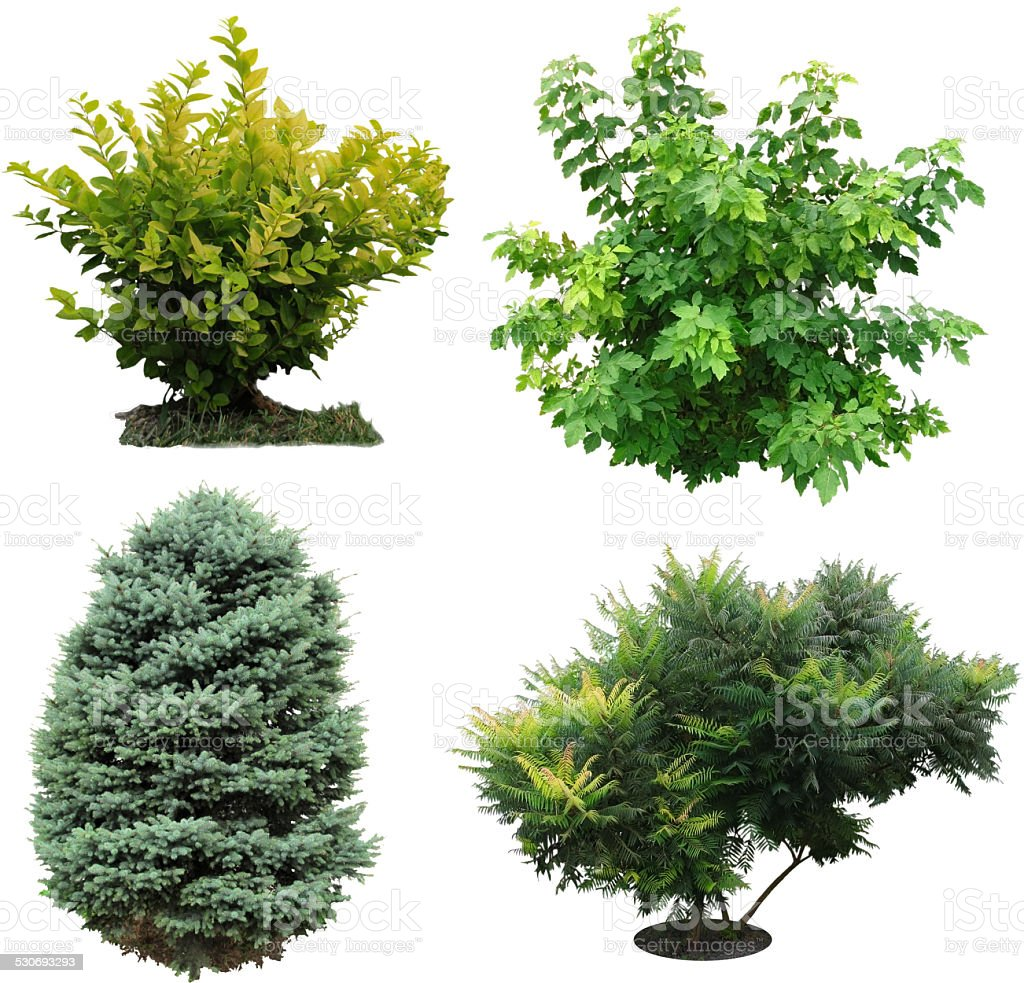 Trees, bushes izolated. stock photo
