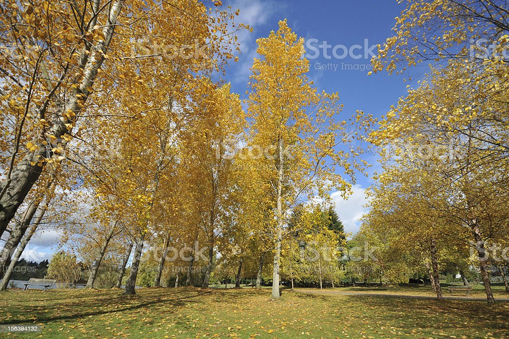 Trees by a lake with fall colors royalty-free stock photo