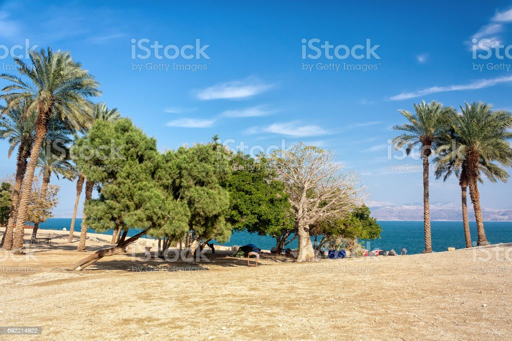 Trees by the Dead Sea - The Holy Land stock photo