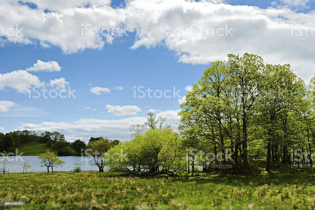 Trees by the edge of Loughrigg Tarn stock photo