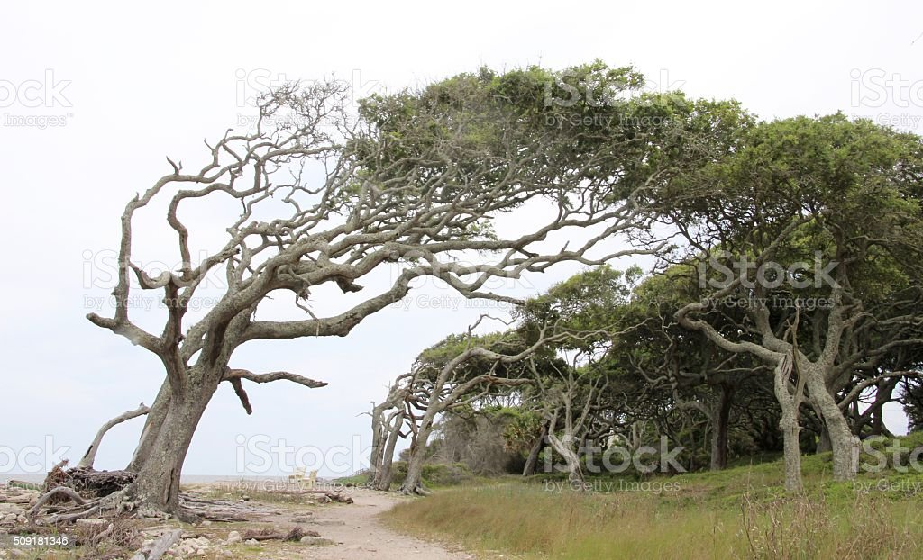 Trees by the Ocean royalty-free stock photo