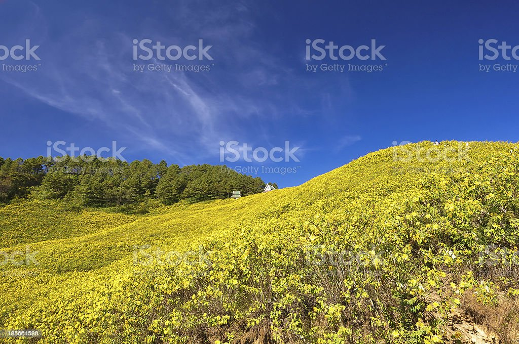 Trees clouds  sky royalty-free stock photo