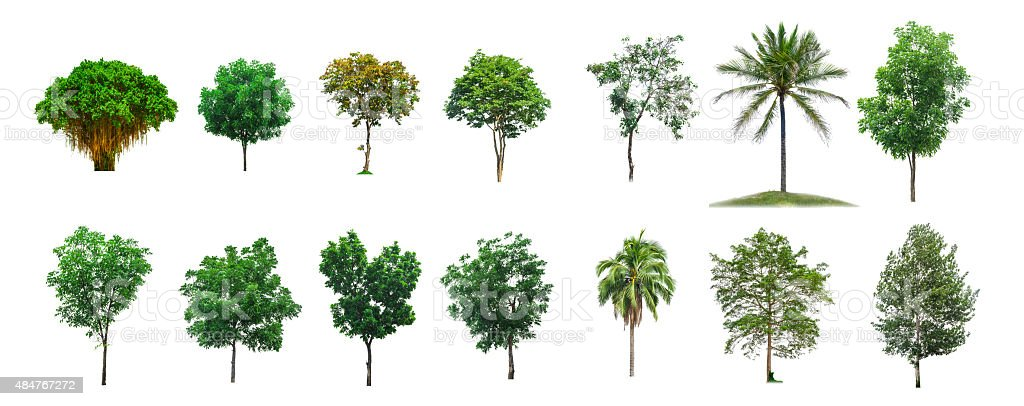 Trees Collection on white isolate background (clipping path) stock photo
