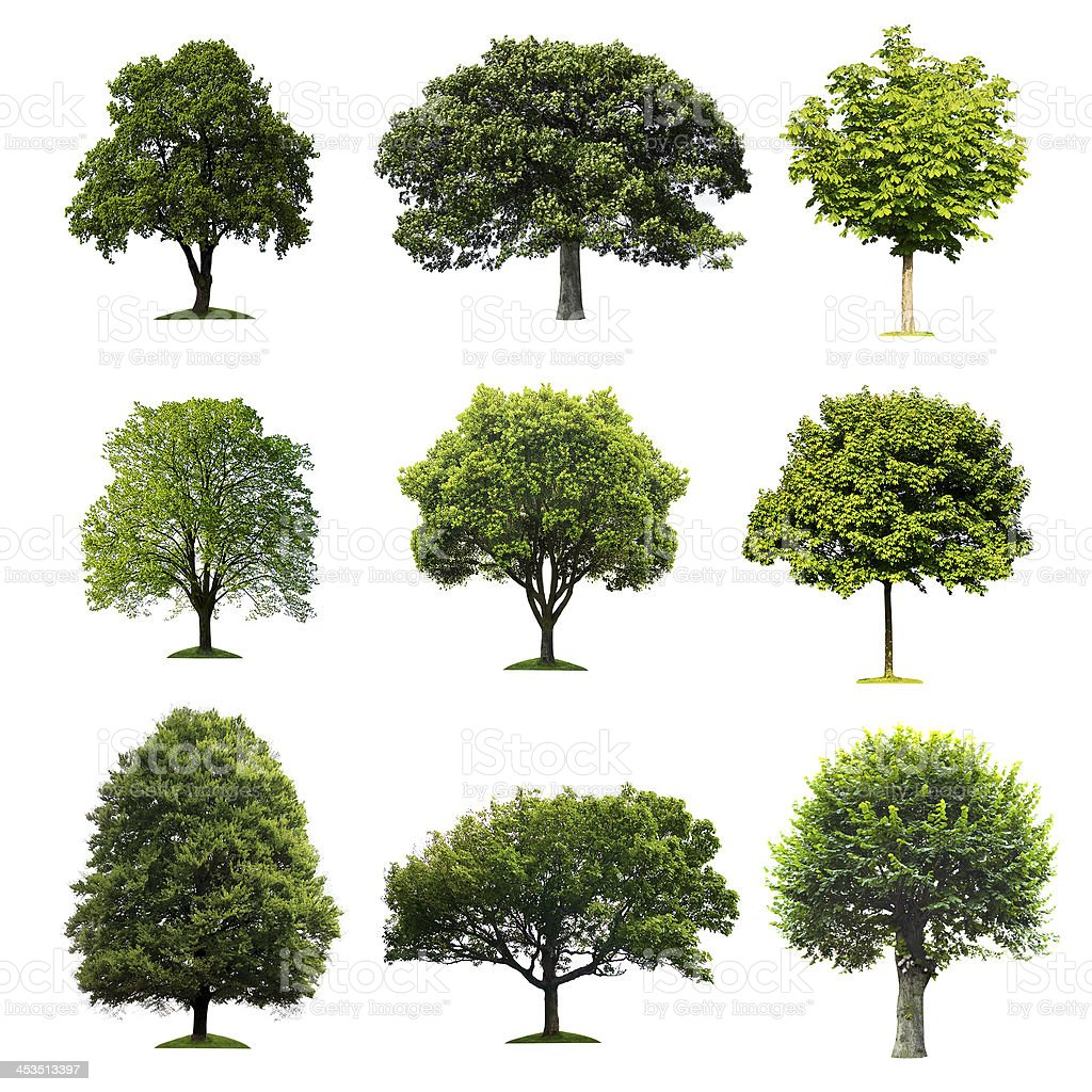 Trees collection stock photo
