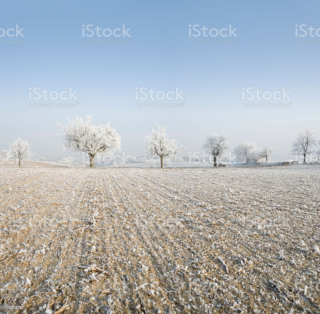 Trees covered with frost (image size XXL) royalty-free stock photo