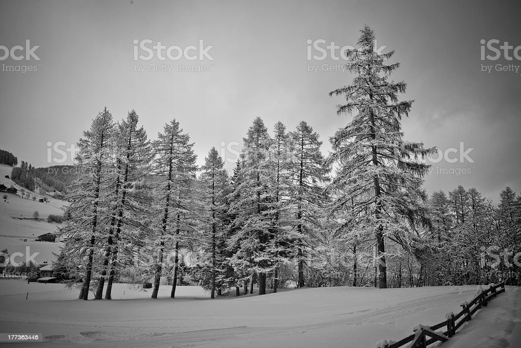 trees covered with snow in val pusteria stock photo