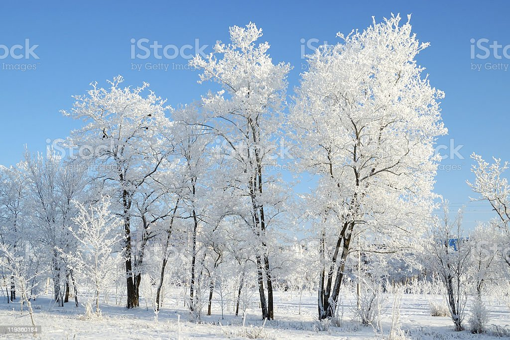 Trees covered with snow stock photo