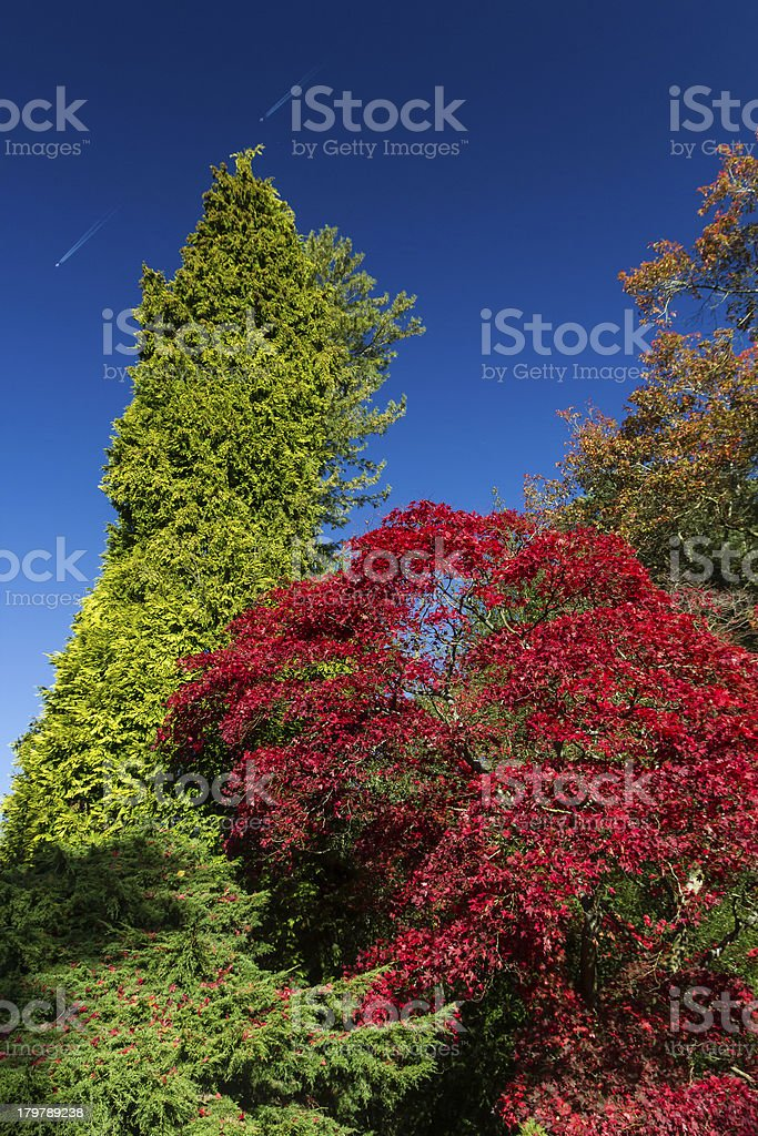 Trees displaying autumnal colors against a blue sky royalty-free stock photo