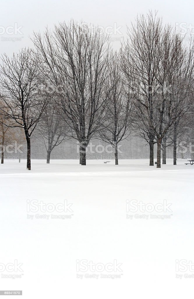 Trees during winter blizzard royalty-free stock photo