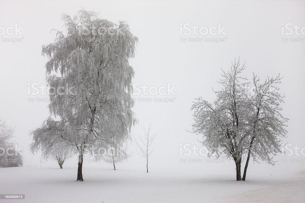 Trees enshrouded in fog. royalty-free stock photo