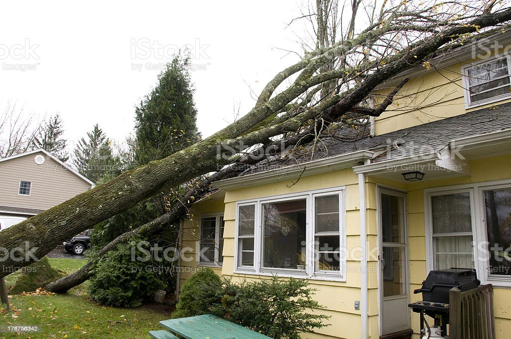 Trees fallen on house roof stock photo