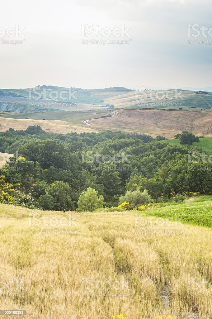 Trees, fields and atmosphere in Tuscany, Italy stock photo