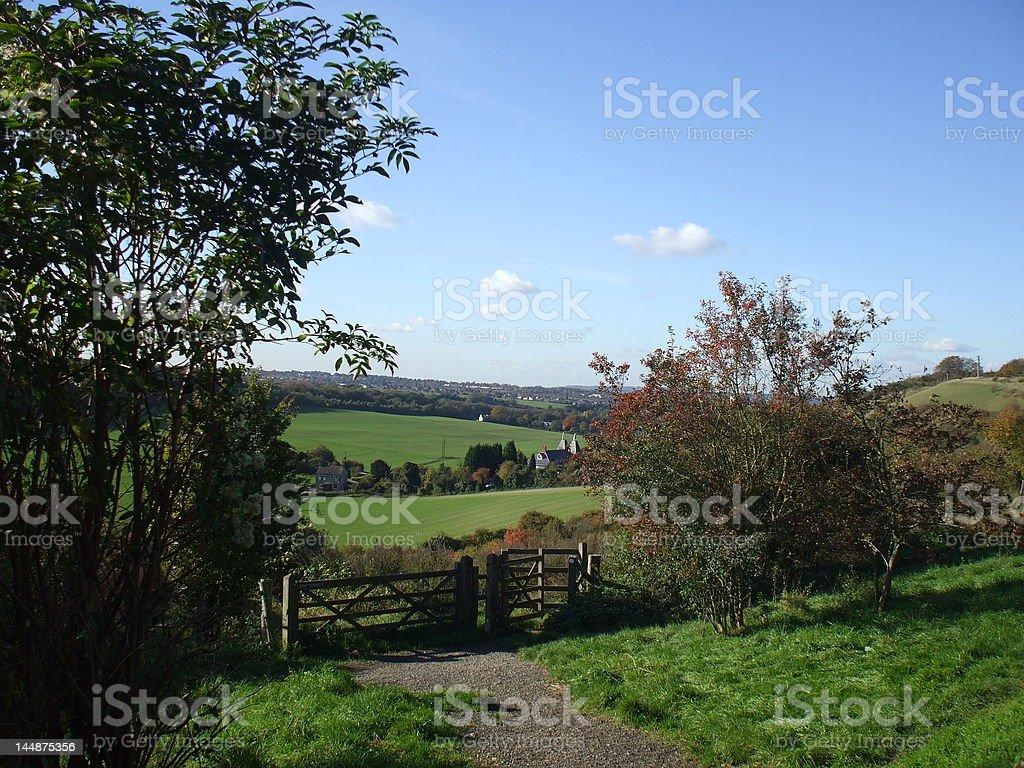 Trees, fields, blue sky stock photo