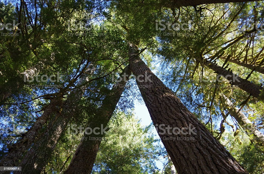 Trees from below stock photo