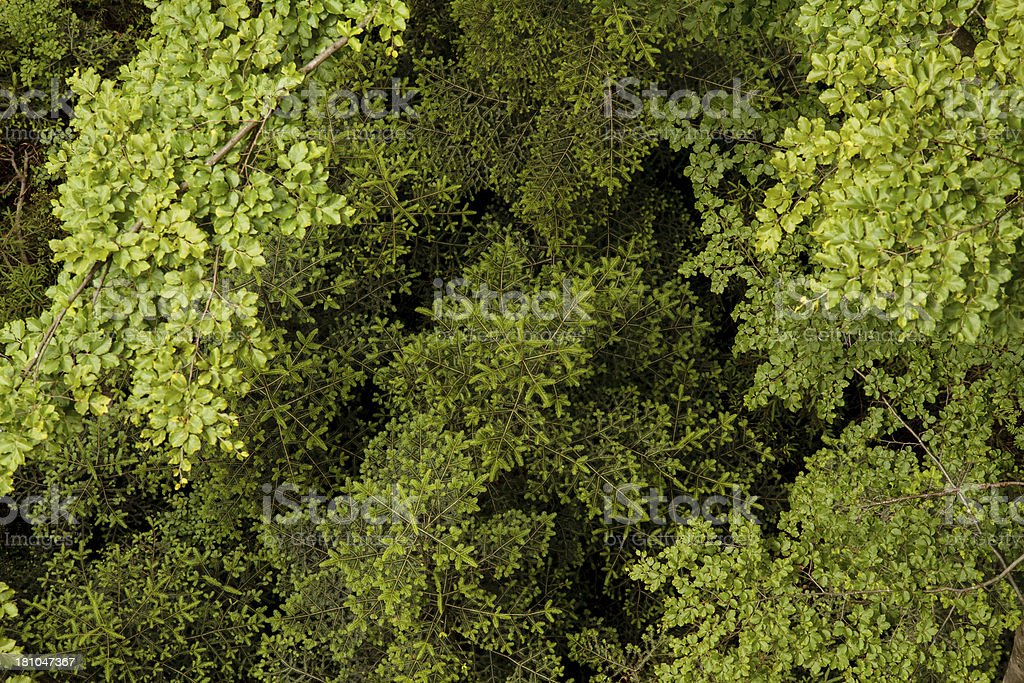 Trees from the top royalty-free stock photo