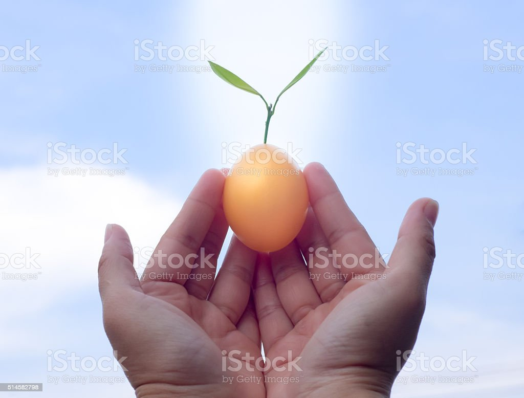 Trees grow from the Golden Easter Egg . stock photo