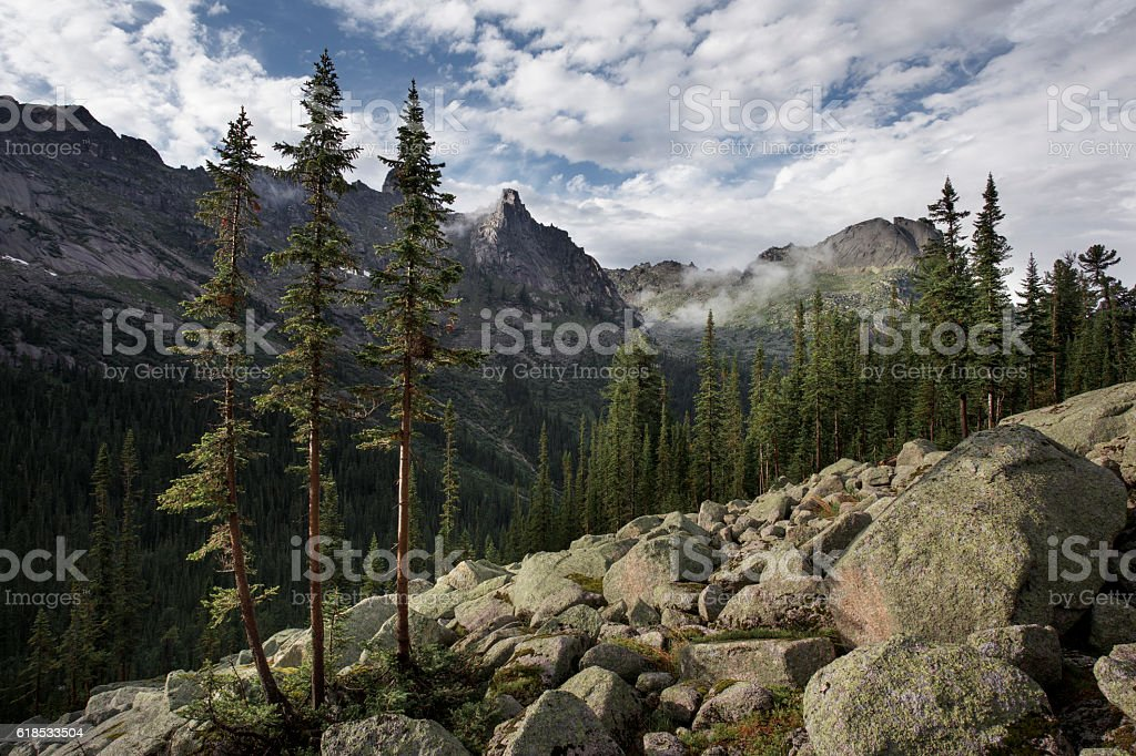 Trees grow in mountains in fog stock photo